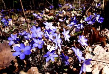 Jarní Křivoklátsko