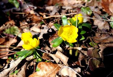 Jarní závan