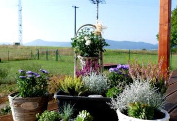 Květinové obžerství
